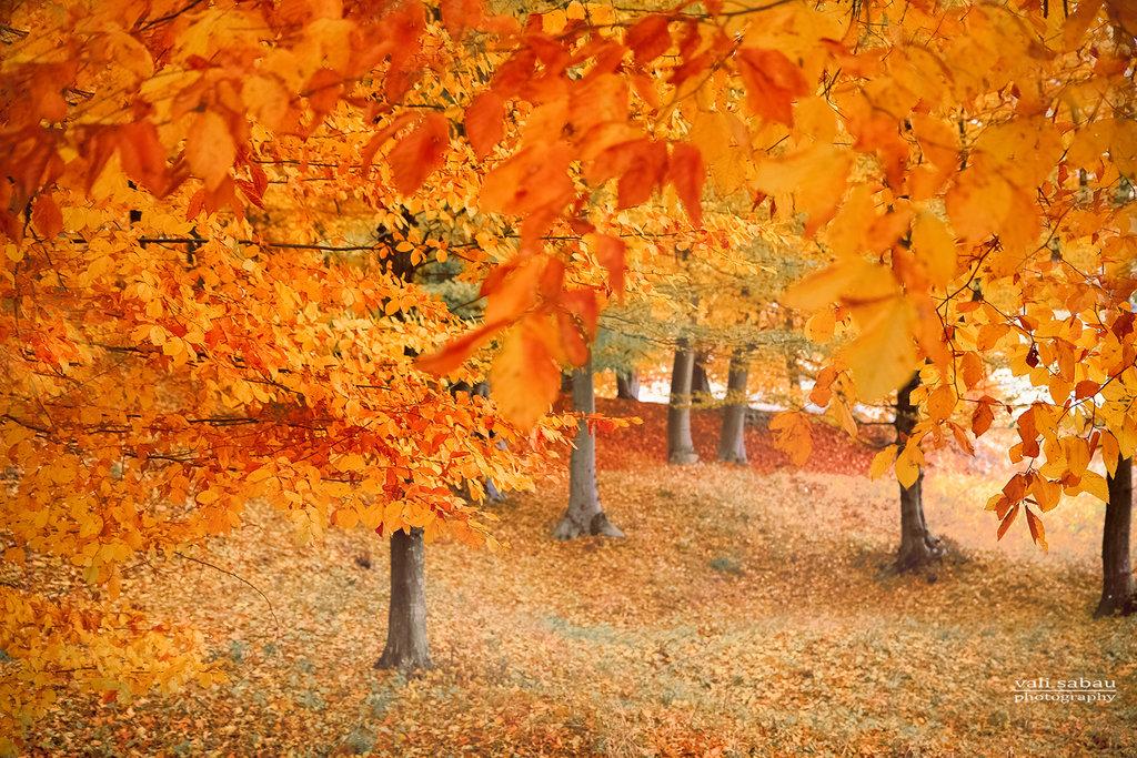 VALENTIN作品 秋意浓 如诗如画的美妙韵律
