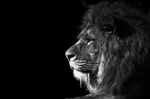 精美黑白摄影作品欣赏 - 佛山设计 佛山设计师 佛山