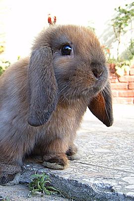 可爱的动物表情摄影